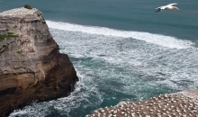 The sea and gannets
