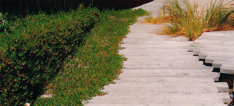 Coastal gardens for Landscape jobs nz