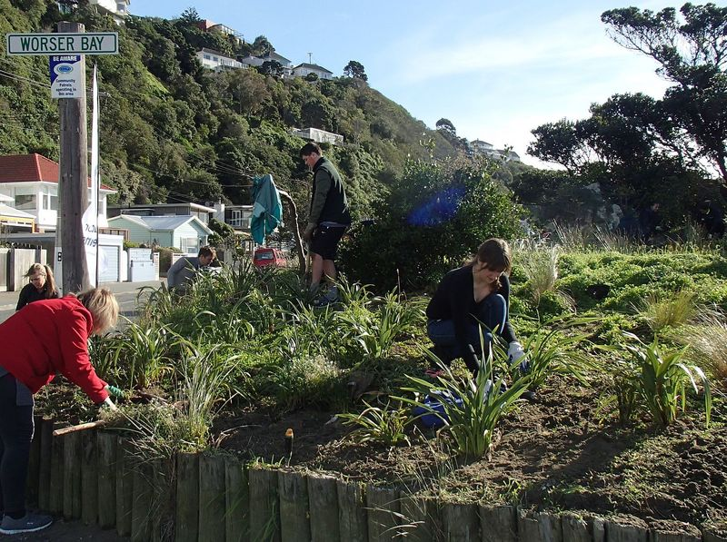 Full volunteers at a places for penguins planting day in wellington photo alison ballance