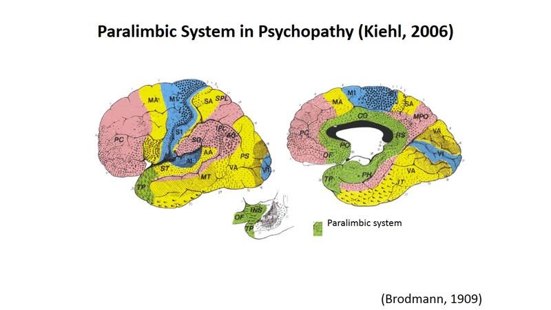 Inside The Brains Of Psychopaths Rnz
