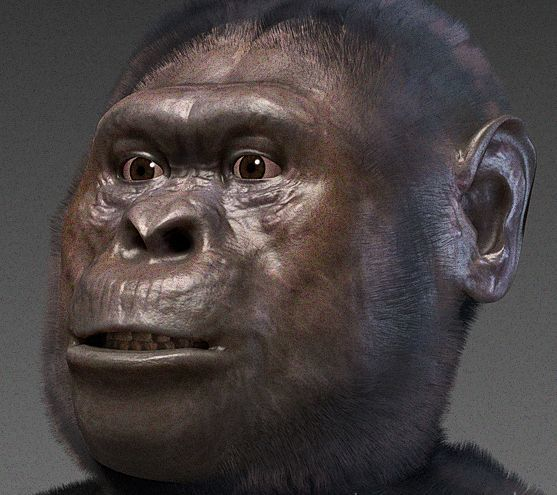 Full australopithecus afarensis   forensic facial reconstruction %28by cicero moraes own work  cc by sa 3.0%29