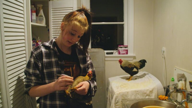 Counting their chickens: Pecking Order | RNZ