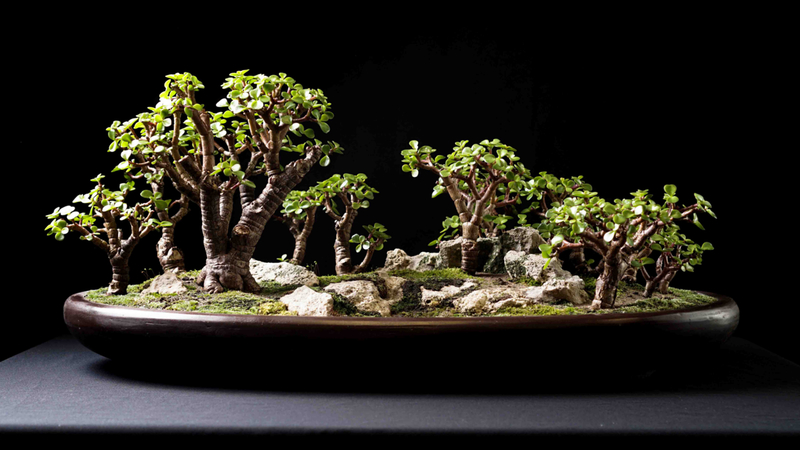 How The Art Of Bonsai Made This Youtuber Famous Rnz