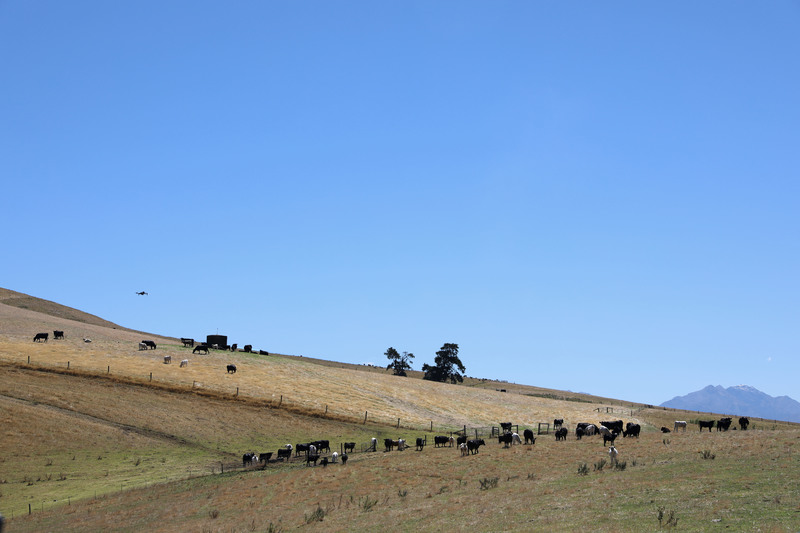 full_Drone_flying_over_cows_on_a_farm_%28edit%29.jpg?1551926112