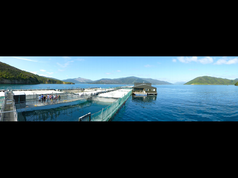 Full salmon farm panoramic