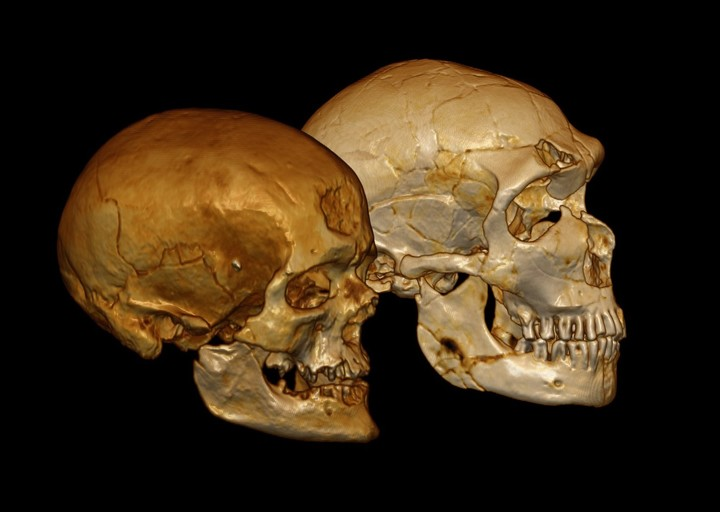 Virtual models of the Cro-Magnon 1 and La Ferrassie 1 skulls.
