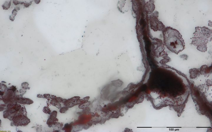 Haematite filament attached to a clump of iron in the lower right, from hydrothermal vent deposits in the Nuvvuagittuq Supracrustal Belt in Québec, Canada. These clumps of iron and filaments were microbial cells and are similar to modern microbes found in vent environments.