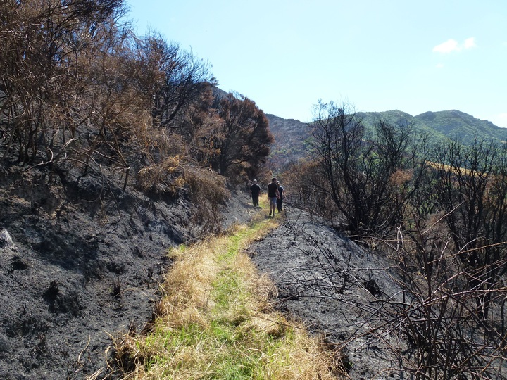 Port Hills fire damage:Ohinetahi Bush Reserve