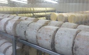 Whitestone Cheese wheels in storage.