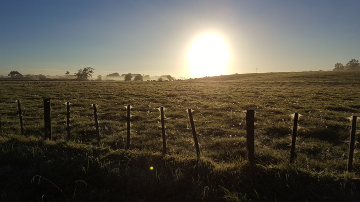 Early autumn morning Waikato