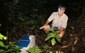 Auckland Council regional biosecurity manager Jonathan Miles gets set to release the kiwi into the wild.