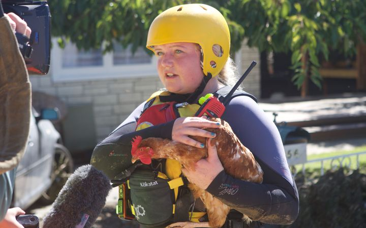 A chicken is rescued from the flood debris in Edgecumbe.