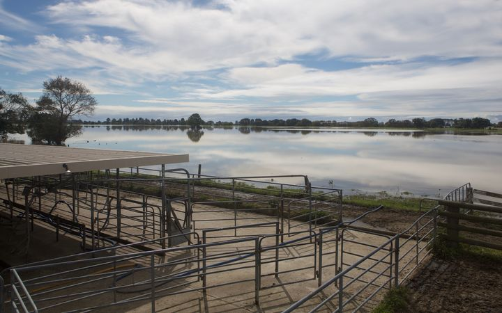 Farms around Edgecumbe face a big cleanup, even after the floodwater recedes.