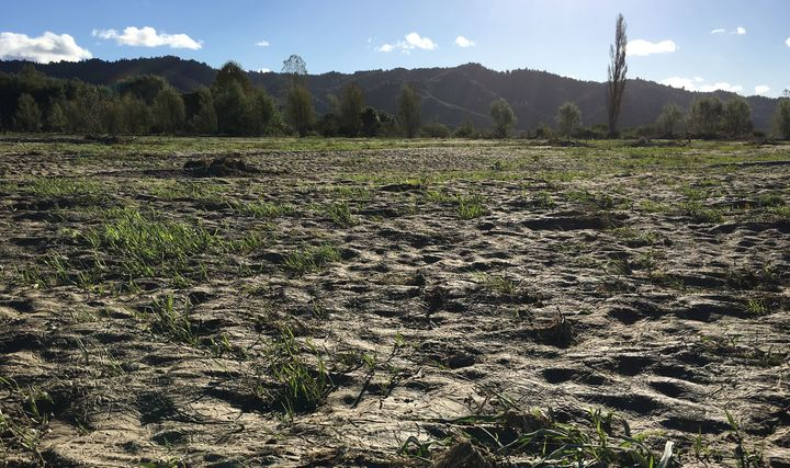 Many of Kevin Clark's paddocks are covered with silt.