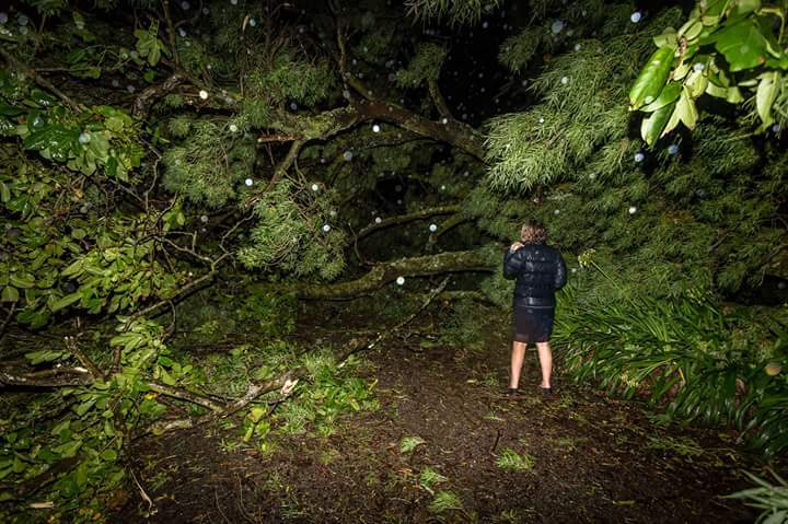 A woman stands in front of a fallen tree on her property in Hastings.