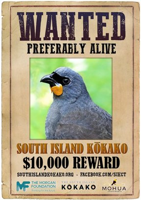 South Island Kokako wanted poster.