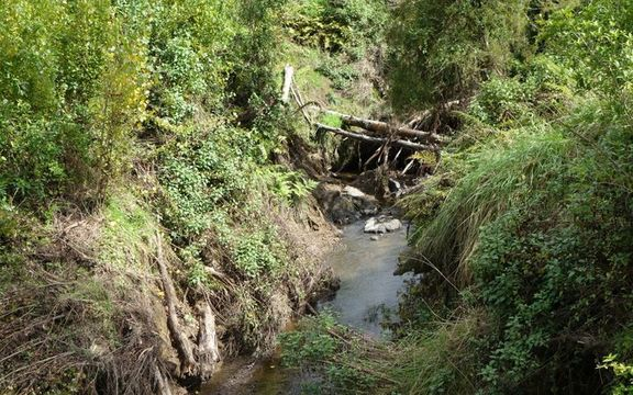 Debris building up in stream near Twin Bridges in Mangakahia Valley