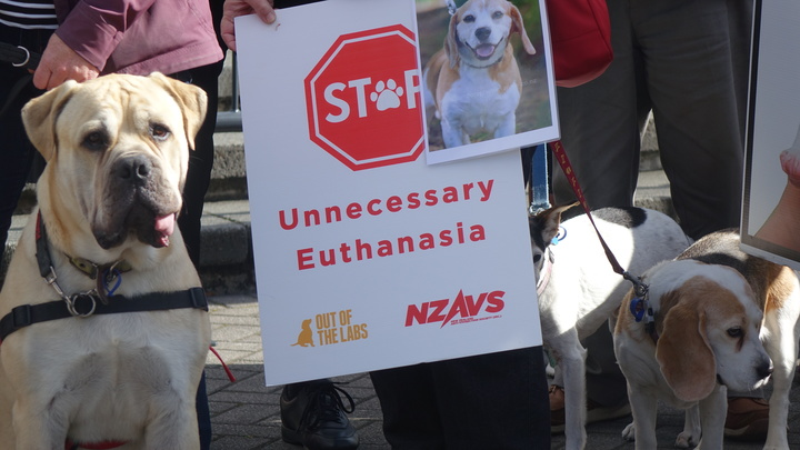 Dogs were part of a protest outside Parliament against euthanasing lab animals