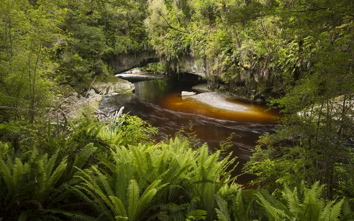 The Oparara Basin offers visitors a chance to go back in time and see a fragment of New Zealand as it looked before humans arrived.
