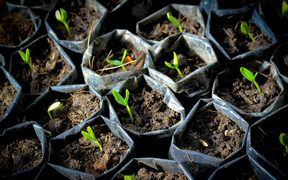 generic seedlings