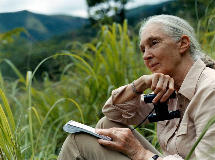 Dr Jane Goodall at Gombe