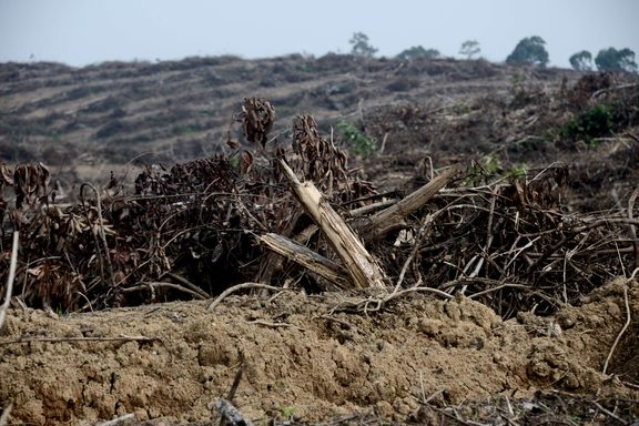An Indonesian forest cleared to plant oil palm trees, 19 May 2017.
