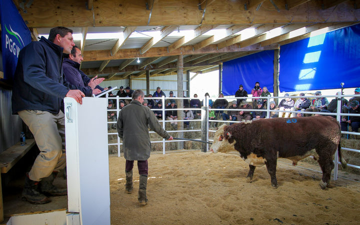 Twenty-one bulls were put in the ring to be auctioned, 18 were sold.