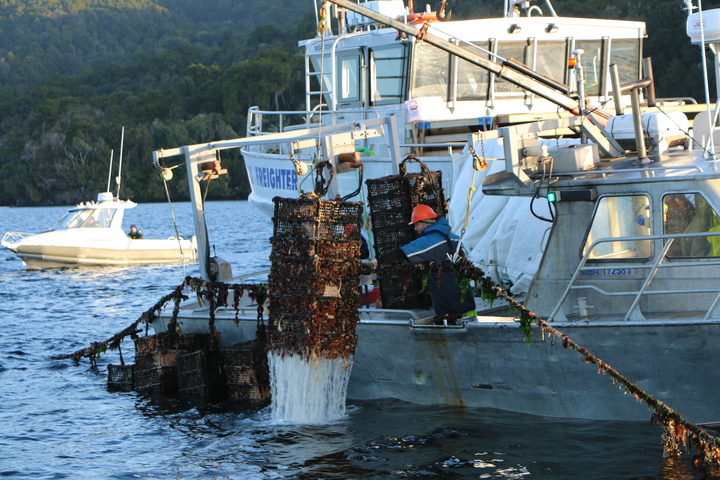 Oyster cages being pulled from Big Glory Bay.