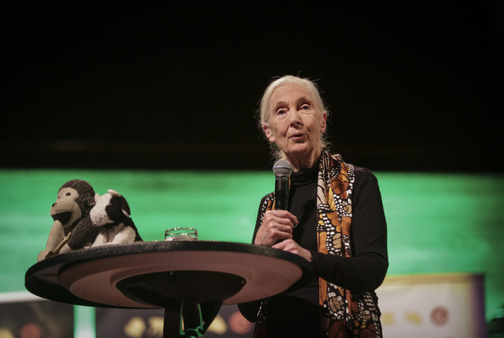 "Jane Goodall speaks at her event  ""Tomorrow & Beyond Tour""."