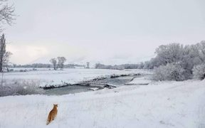 A cat explores the snow in Fairlight, south of Kingston, in Otago.