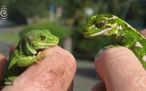 Endangered green gecko stolen from visitor centre: RNZ Checkpoint