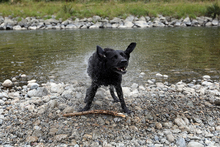 Dog by Hutt River