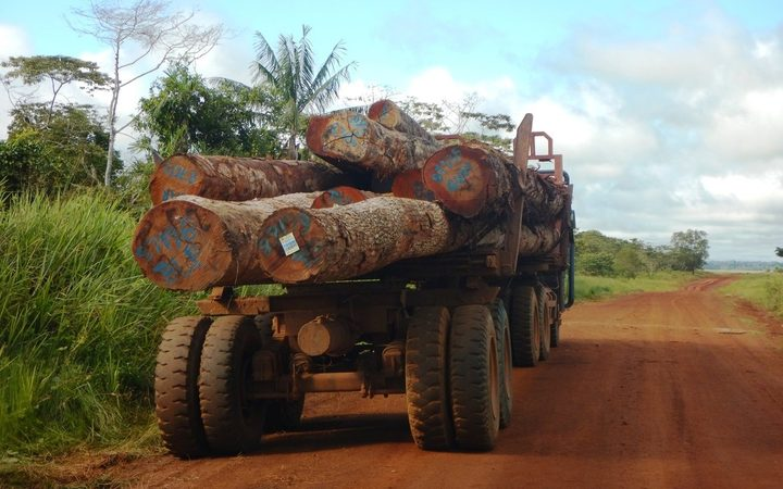 Loggers still operating on PNG lease despite court ruling