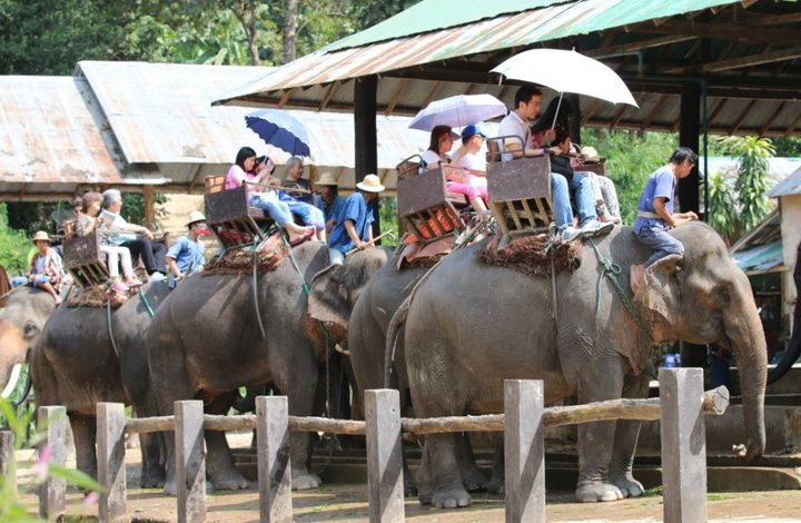 Tourists riding elephants in Thailand. A campaign has been launched to urge tourists to act responsibly on holiday, where local wildlife can be exploited for entertainment.