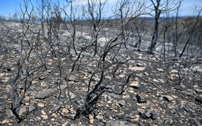 Burnt trees and bushes following a wildfire in Artigues, southeastern France last month.