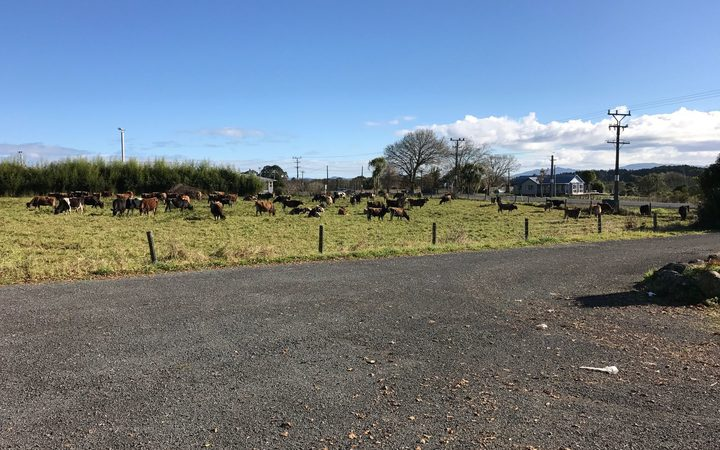 Poroti cattle graze opposite the springs. Zodiac says this shows that there are  sources of contamination closer to the springs than their factory will be, which have not harmed the water.