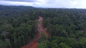 Logging road, Pomio, East New Britain.