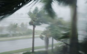 Palm trees blow in the wind as Hurricane Irma arrives into southwest Florida.