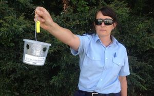 Ministry for Primary Industries Compliance Officer Marcie Cooke holding a trap.