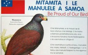 Samoa's native bird, the Manumea.