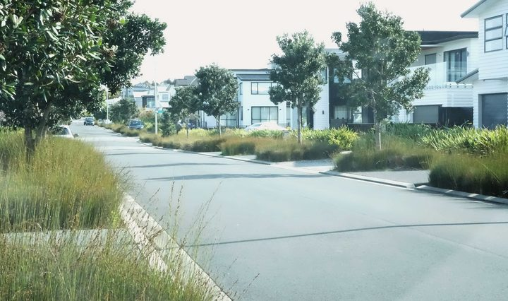 Stree in new development with rushes and Irises planted in beds where grass verges would have been
