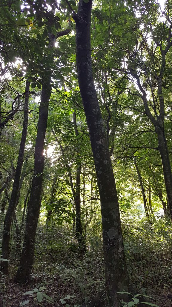 Longbush Reserve is a 10-hectare patch of native forest on the banks of the Waimata River near Gisborne.