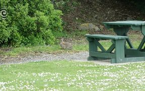 Otago town struggling under rabbit plague