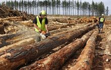 the death of a Maori forestry worker could have been avoided.
