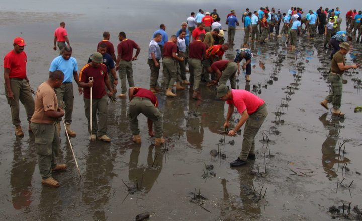 Defence force personnel in Fiji plant mangrove seedlings