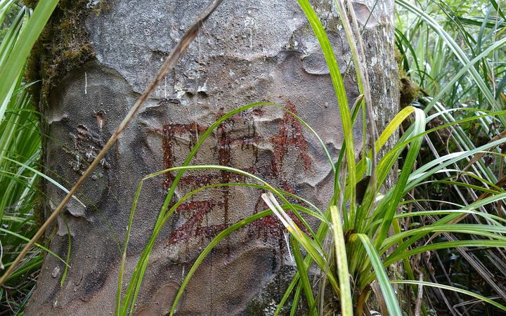 Recent graffiti on a  Kauri in Waipoua Forest sanctuary.