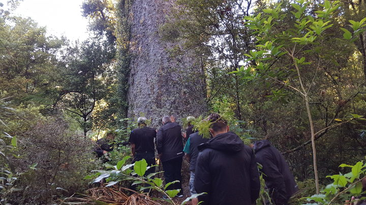 Te Kawerau ā Maki announced a rāhui to discourage people from visiting the Waitakere Ranges in a bid to stop the spread of kauri dieback.