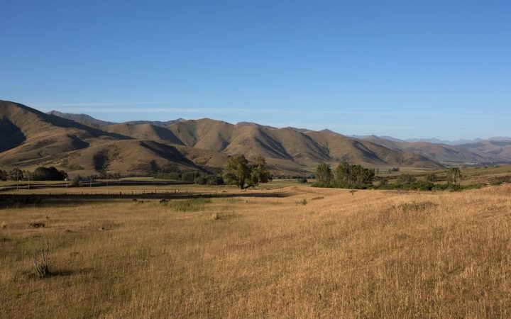 Dry Southland pasture