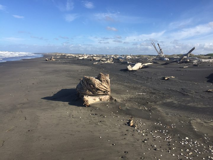 A view of Koitiata Beach, south of Whanganui, with large chunks of driftwood and stones scattered across the sand.