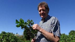 Tony Howey, a blackcurrant farmer in Canterbury.